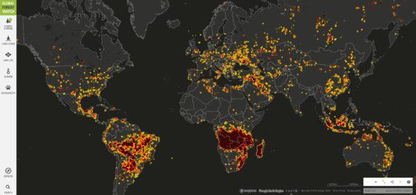 Płoną lasy , płoną na całym świecie – i nic w tym tragicznego!